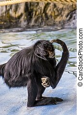 hoofd, critically, aap, primaat, gekopt, spin, gebrengenene...