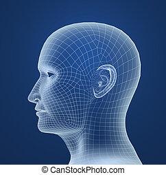 hoofd, draad, model, menselijk