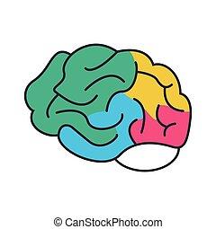 hoofd, kleurrijke, menselijk, pictogram