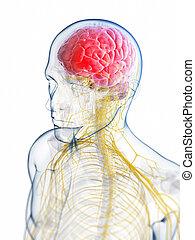 hoofd, -, menselijk, hoofdpijn