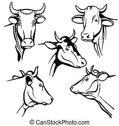 hoofd, natuurlijke portretten, koe, boerderij, vee, vrijstaand, pakking, vector, melkinrichting, gezichten, producten