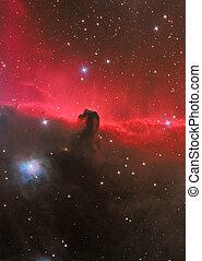 hoofd, nebula, paarde