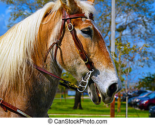hoofd, paarde, achtergrond