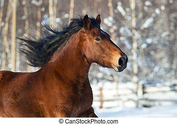 hoofd van, een, schetsen paard, rennende