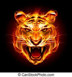 hoofd van, een, tiger, in, vlam