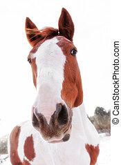 hoofd van, paarde