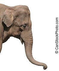 hoofd, vrijstaand, elefant