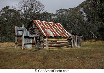 hoog, land, australiër, hut, stockmans