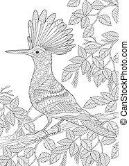 Hoopoe bird on birch tree branch
