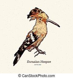 hoopoe, illustration., スケッチ, ベクトル, 刻まれる, 手, 引かれる, bird.