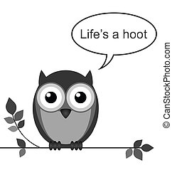 Hoot - Life is a hoot owl message isolated on white ...