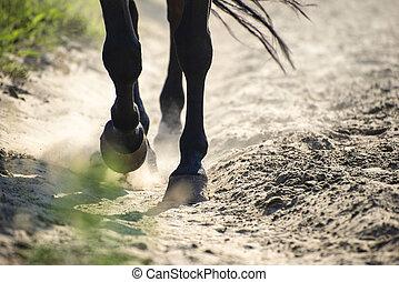 Hooves in dust