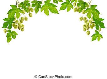 Decorative fresh hop plant border, isolated on white background