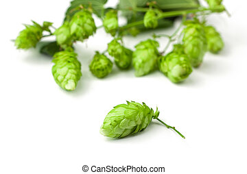 Hop close-up