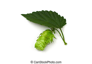 Hop cone and a leaf