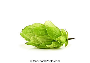 hop cone isolated on white