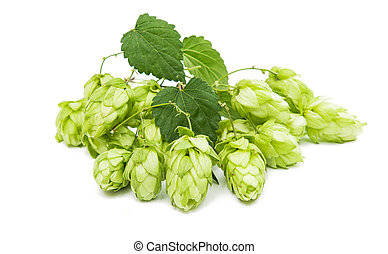 Hop cone isolated