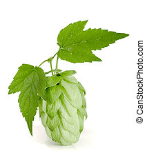 hop cone with leaf isolated on white background close-up