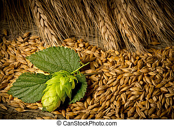 Hop Cones And Barley - still life with raw material for beer...