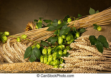 hop cones barley and wheat - raw material for beer...