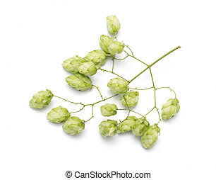 hop cones on a white background