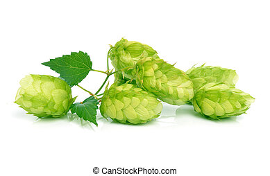 Hop isolated on white