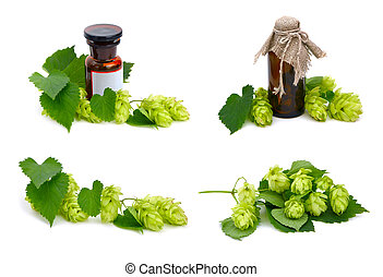 Hop plant and pharmaceutical bottles. - Hop plant and...
