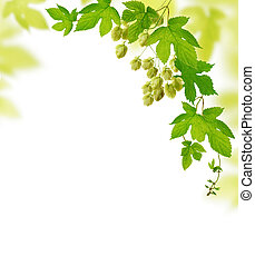 Decorative frame with fresh hop branches, isolated on white background
