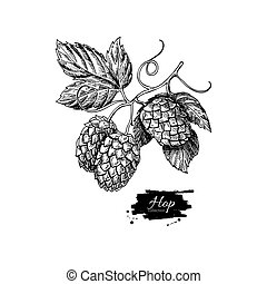 Hop plant vector drawing illustration. Hand drawn artistic beer  hopes with leaves on branch.
