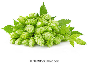 hop with green leaf and twig isolated on white background