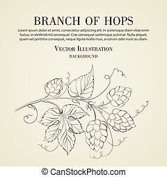Hop with leafs isolated.