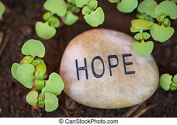 Sprounting plants surround a hope message rock