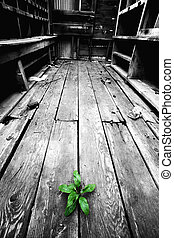 hope - plant emerging through the cracks of an old floor