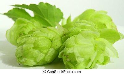 hops, белый
