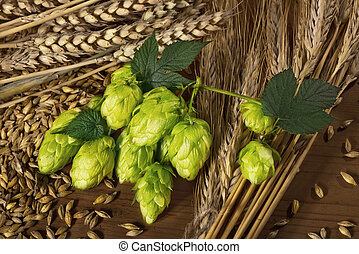 hops and barley - raw material for beer production