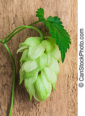 Hops  background of the old board