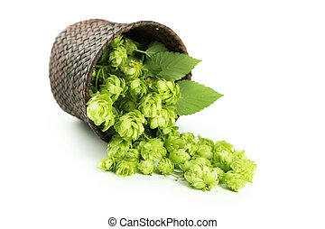 Hops in basket isolated on white