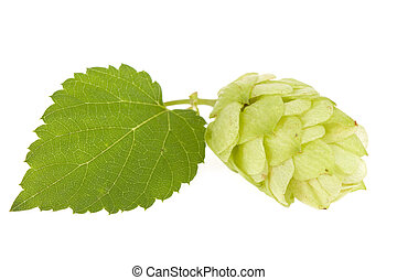 Hops isolated on the white.
