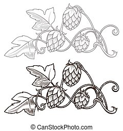 Hops ornament vector illustration - Stylish hop branch hand ...
