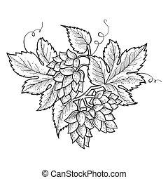 Hops plant engraving sketch vector illustration. Scratch...