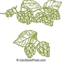 Hops plant sketch for food and drinks design - Hops plant ...