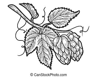 Hops plant. Sketch scratch board imitation. Black and white. Engraving vector illustration.