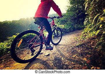 hora, pokus, jezdit na kole, les, jízdní, východ slunce