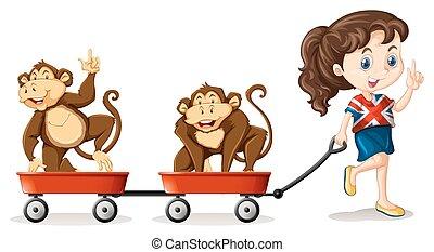 hordoz, leány, vontatás, majmok