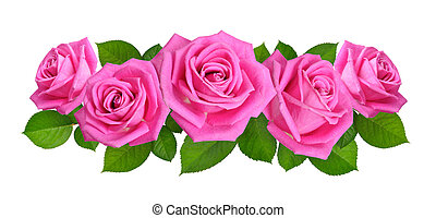 Horisontal Composition With Pink rose flowers. Isolated on white background