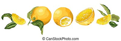 Horisontal fruit decor line set with orange fruit, halves, leaves and sllices made in realistic graphic design vector drawing