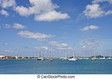 Horizon of White Sailboats at Marina