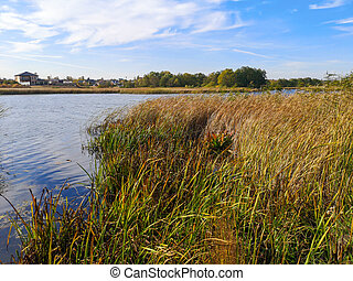 Horizon on the lake with reeds. Nature