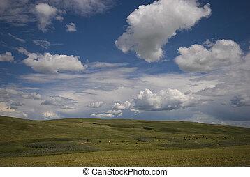 horizon, prairie