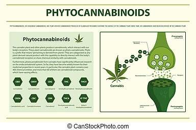 horizontaal, phytocannabinoids, infographic